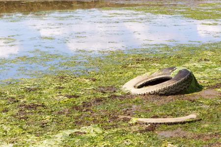 Un vieux pneu jeté dans une flaque d'eau contaminée. Delta du fleuve Axios