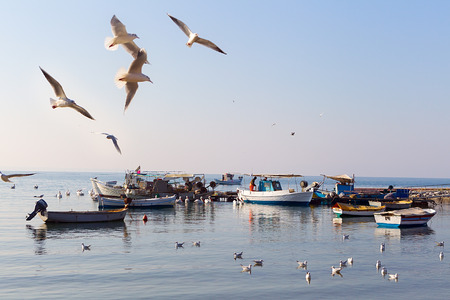Seagulls flying over boats in Thessaloniki, Greece.