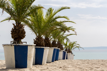 Pathway on sea coast with palm trees in flower pots  photo