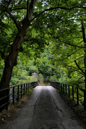 Bridge in bright forest. Natural composition photo