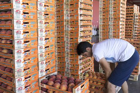 """cooperativa: NAOUSSA GRECIA- 20 de agosto 2014: Productos de la Cooperativa Agr�cola de Naoussa Grecia transportados en cajas. Los famosos """"Naoussa Peaches"""" son el principal producto de la zona. La producci�n de frutos."""