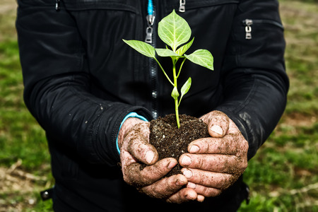 earth handful: Man hands holding a green young plant. Symbol of spring and ecology concept