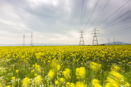 coleseed: Yellow rapeseed flower field and blue sky with Electric post, in Greece Stock Photo
