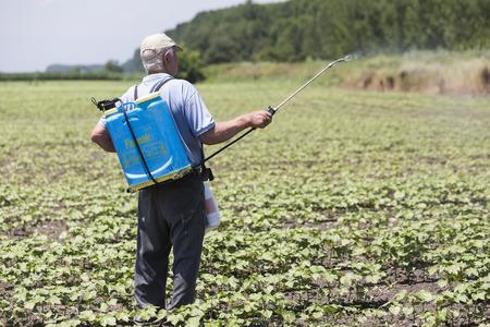 granjero: Tesalónica, Grecia - 21 de junio de 2015: Farmer fumigación de campo de algodón en Grecia.
