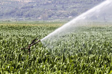 pivot: Thessaloniki, Greece - June 21, 2015: A center pivot sprinkler system watering a grain field in the fertile farm fields of Greece