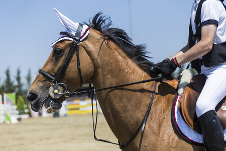 dapple grey: Close up of the horse during competition matches riding round obstacles