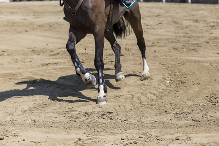 stirrup: Close up of the stirrup on the horse during competition matches riding round obstacles