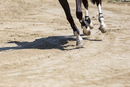 obstacles: Close up of the horse during competition matches riding round obstacles