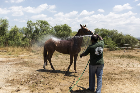 rinse spray hose: Thessloniki, Greece, June 14, 2015: Man washes horse before the competition matches riding round obstacles