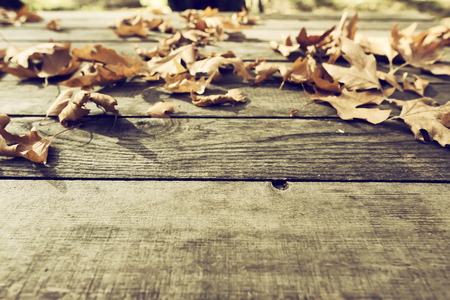 wooden surface: Autumn leaves on a wooden surface (soft focus). Cross processed image for vintage look. shallow depth of field Stock Photo