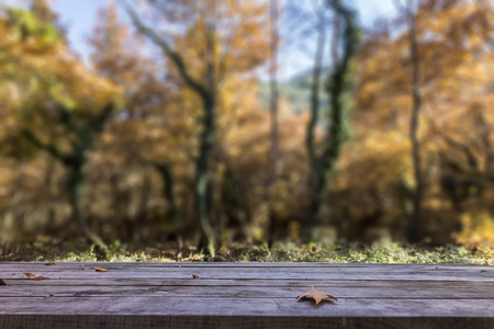 tilt: Fall leaves on rustic wooden table with the forest on the background. Tilt