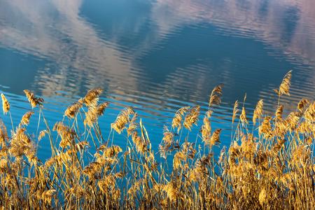 kerkini: Close up View of Kerkini Lake in day light in Greece