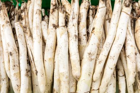 harvest white asparagus from the field Stok Fotoğraf