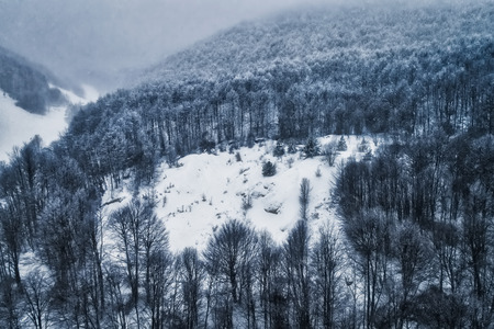 Aerial view of forest in the winter during the snowfall in the area of Naoussa in northern Greece. Captured from above with a drone. Banque d'images
