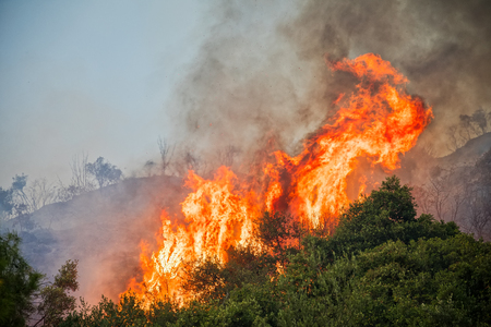 fire in a pine forest in Kassandra, Chalkidiki, Greece