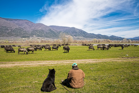 Buffalo grazing next to the river Strymon in Northern Greece.