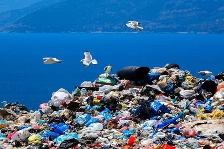 Mülldeponie mit Möwen, die nach Nahrung suchen Standard-Bild