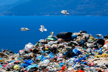 Waste disposal site with seagulls scavenging for food