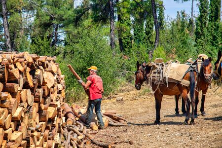 Thessaloniki, Greece - June 26, 2019: woodcutter stacks the cut wood that is transported by horses and mules in the suburban forest of Thessaloniki Editorial