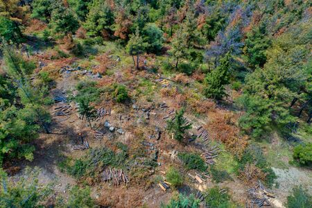 Aerial view of deforestation coniferous trees in the suburban forest of Thessaloniki