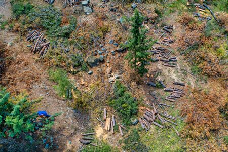 Aerial view of deforestation coniferous trees in the suburban forest of Thessaloniki 版權商用圖片 - 129978292