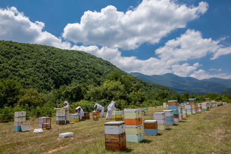 Florina, Greece - July 10, 2020: Beekeepers working to collect honey in an area of Florina in northern Greece. Organic beekeeping