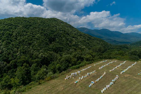 Beekeepers working to collect honey in an area of Florina in northern Greece. Organic beekeeping