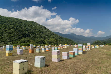 Hives in an apiary with bees flying to the landing boards in an area of Florina in northern Greece. Organic beekeeping