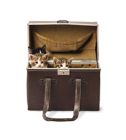 Three few weeks old kittens hiding in retro traveling box isolated on white background photo