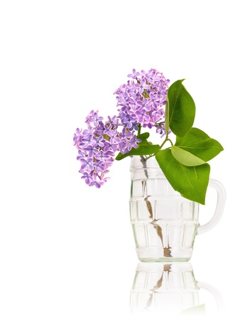 Branch of lilac blossom with leaves in the glass isolated on white background with reflection