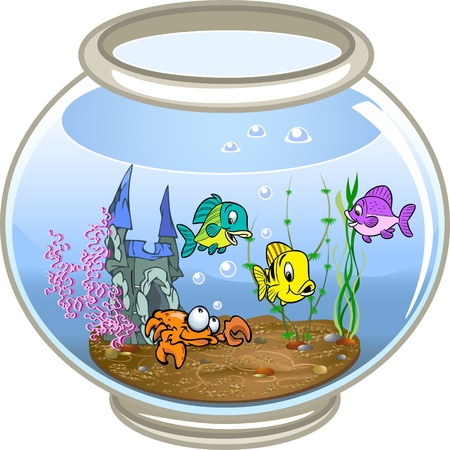Beautiful fish swim in a fishbowl with water.At the bottom of the crab, seaweed and decoration.On a white background.