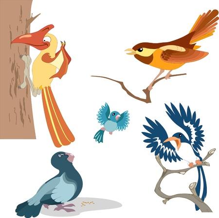 paloma caricatura: La ilustración muestra una gran variedad de pájaros de hermosos dibujos animados.Realizan en capas separadas.