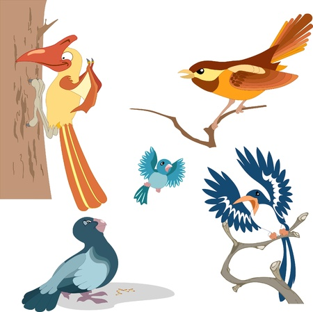 woodpecker: The illustration shows a variety of beautiful cartoon birds.Performed on separate layers. Illustration