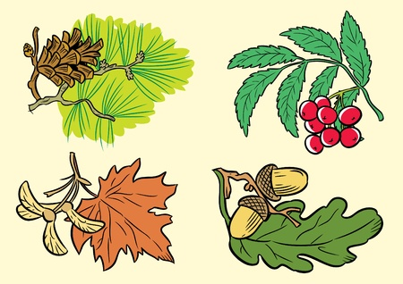 pine cone: The illustration shows a few types of leaves of different species of trees.