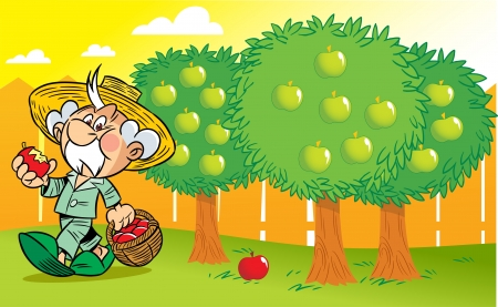 Gray-haired old man in the garden gathering apples  Illustration done in cartoon style  Vector