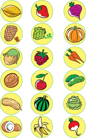 The illustration shows the vaus gifts of nature  This is several kinds of nuts, fruits and vegetables  Illustration done in cartoon style, on separate layers on a white background  Stock Vector - 17527109