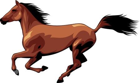lince: La ilustración muestra un hermoso caballo. Ella corre, vuela melena y la cola. Ilustración aislada en el fondo blanco.