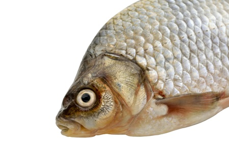 gills: The photo shows a close-up of goldfish on a white background  Stock Photo