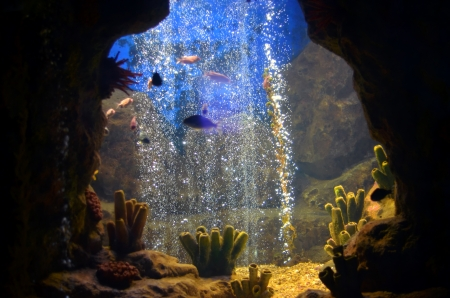 exoticism saltwater fish: a group of exotic fish on a sea coral