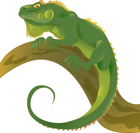 The illustration shows a green lizard on a tree branch  Achieved in isolation on a white background  Vector
