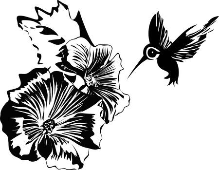 colibri et fleurs Vecteurs