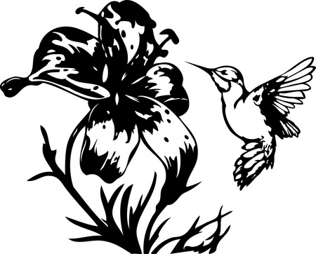 hummingbird: The illustration shows the hummingbird near a beautiful  flowers. Illustration done on separate layers, black contour isolated on white background. Illustration