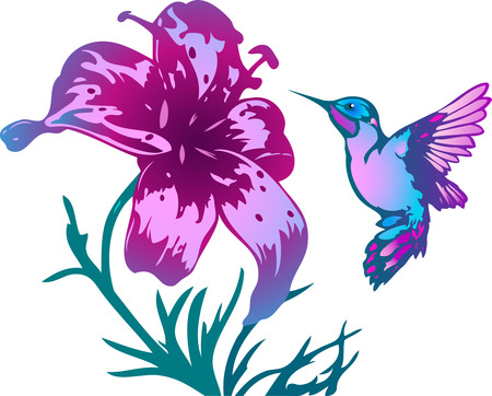 The illustration shows the hummingbird near a beautiful flowers pink. Illustration done on separate layers.