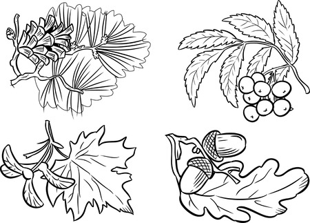 The illustration shows a few types of leaves and fruit of different species of trees. Illustration made on the individual layers black contour isolated on white background.