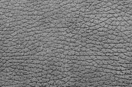 origen animal: La foto muestra el fondo con textura de la piel gris con el patrón de la piel arrugada del natural de origen animal