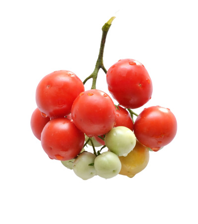 maturity: The photo shows a bunch of cherry tomatoes of different maturity isolated on white background Stock Photo