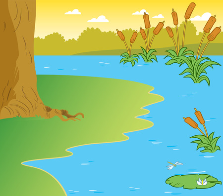 The illustration shows the part of the shore of a pond with reeds and water lilies