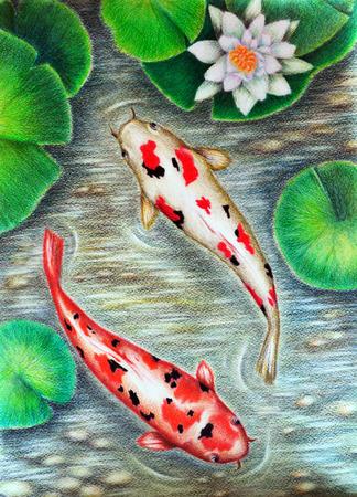 Original painting colored pencils. Beautiful Koi fish. Modern art. Stock Photo