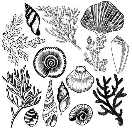Set of seashells on a white background. Vector. Ilustracje wektorowe