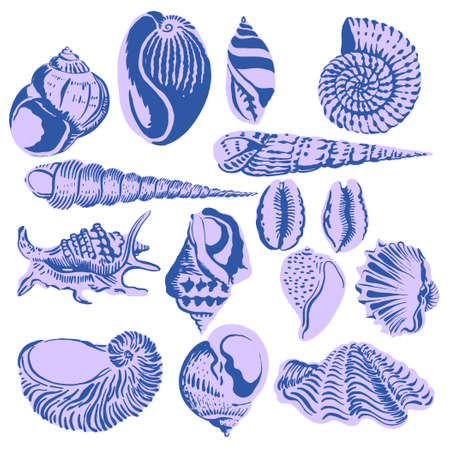 Set of seashells on a white background. Vector.